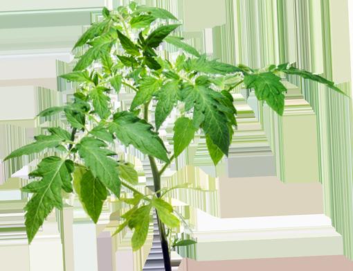 la plante peut enfin s'épanouir grâce à BiosmoZ